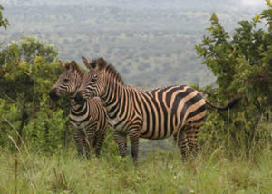 Lake Mburo-national-park