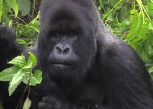 Bwindi Impenetrable Forest Np