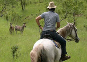 horse-back-safari