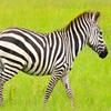 Wildlife Uganda
