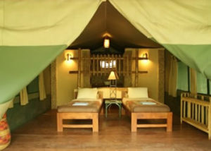 kibale-forest-camp-1