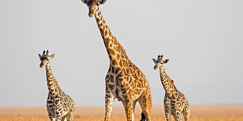 Wildlife Tour Adventures in Uganda