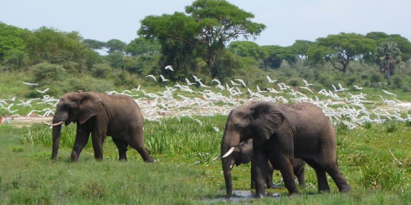 Wildlife Tours in Murchison Falls