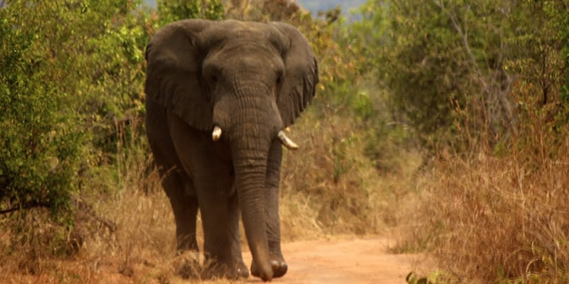 Wildlife Safaris in Akagera National park Rwanda