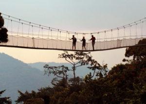 Adventure Activities Uganda-canopy-walks