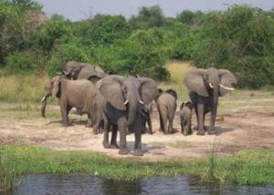 Active Uganda Safaris-3 Days Queen Elizabeth Tour