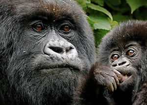 Extra Tours: Best Short Safaris (2022) in Uganda, Rwanda, Congo Tours