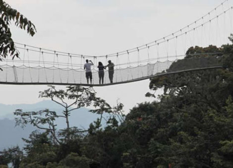 Canopy Walks in Nyungwe Forest