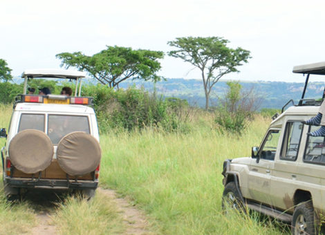 Game Drives in Uganda & Rwanda