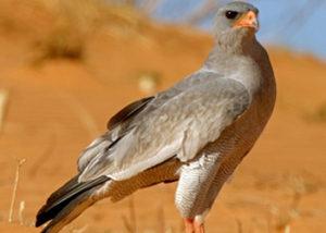 Bird Watching in Africa