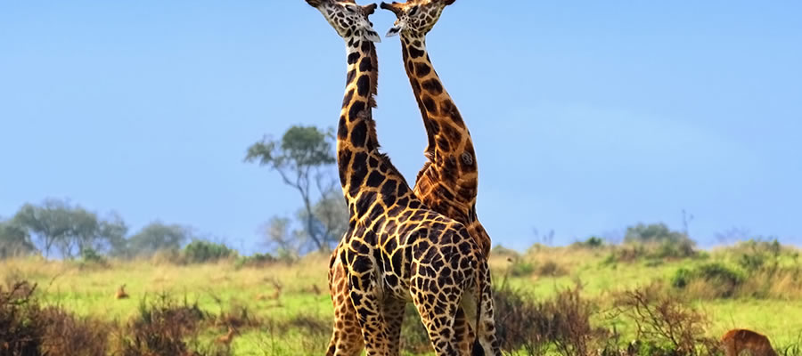 Wildlife Safari Tours Uganda