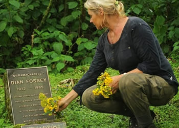 5 Days Gorillas and Dian Fossey Hike