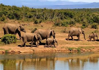 3 Days Budget Rwanda Wildlife Safari in Akagera National Park