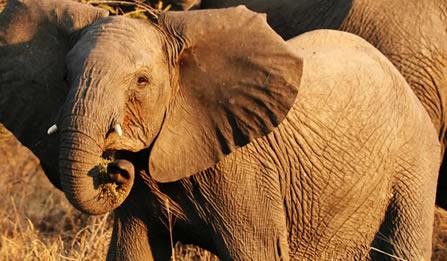 7 Days Classic Uganda Gorillas, Chimps & Wildlife Safari
