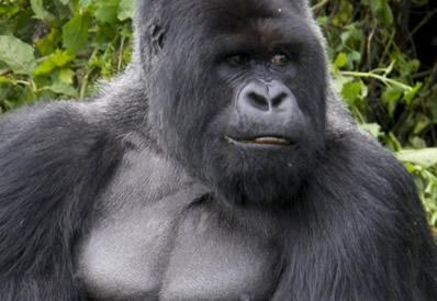2 Days Gorilla Trekking Safari in Volcanoes National Park
