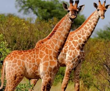 3 Days Uganda Lake Mburo Wildlife Safari